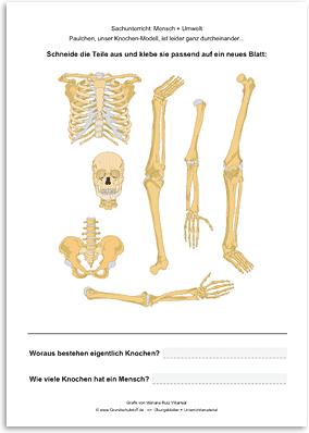 Download => Puzzle: Das menschliche Skelett (1)