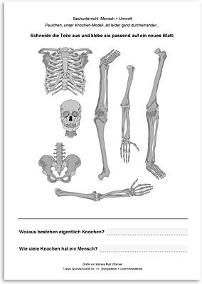 Download => Puzzle: Das menschliche Skelett (2)