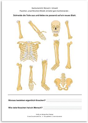 Download => Puzzle: Das menschliche Skelett (3)
