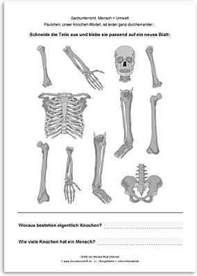 Download => Puzzle: Das menschliche Skelett (4)