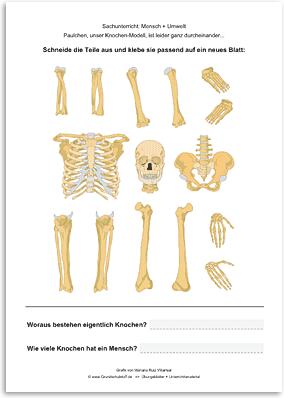 Download => Puzzle: Das menschliche Skelett (5)