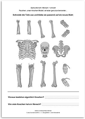 Download => Puzzle: Das menschliche Skelett (6)