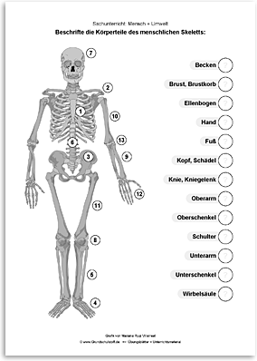 Download => Das menschliche Skelett (2)
