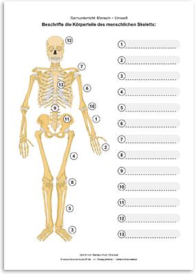 arbeitsblatt sachunterricht mensch umwelt menschliches skelett beschriften nr. Black Bedroom Furniture Sets. Home Design Ideas