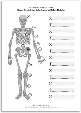 Download => Das menschliche Skelett (4)